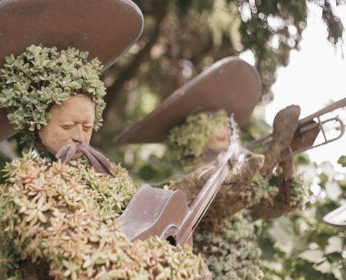 San Diego Botanical Gardens succulents