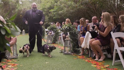 dogs go down the aisle